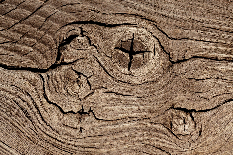 Investigador sobre la madera